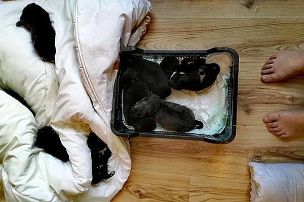 Полиция рассказала, как продвигается дело о выброшенных в мусорник щенках из Резекн