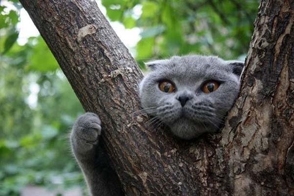 Вилянский кот провел на дереве два дня