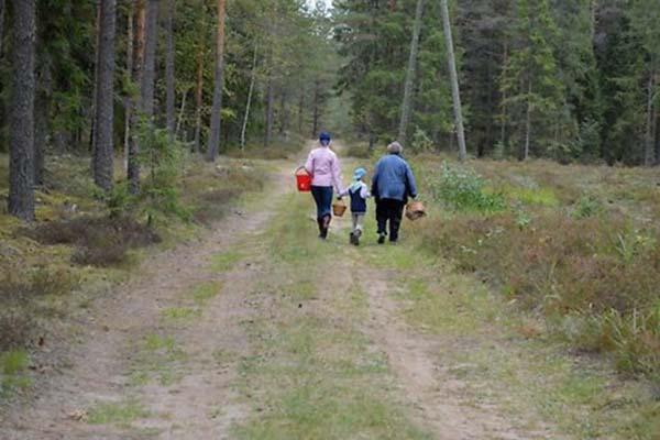 """В Межвидской волости грибники нашли в лесу мертвую """"латгальскую чупакабру"""""""
