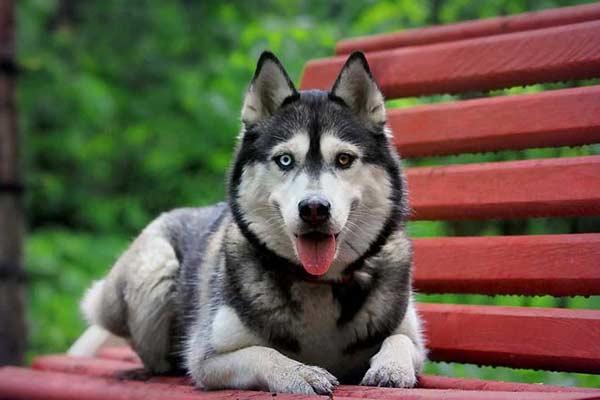 У владельцев собак есть не только права, но и обязанности